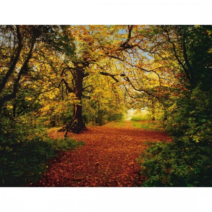 Φωτοταπετσαρία Τοίχου Δάσος - Komar - Decotek 8-068