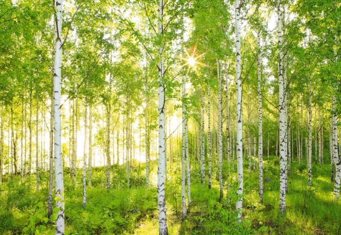 Φωτοταπετσαρία Τοίχου Δάσος - Komar - Decotek 8-519