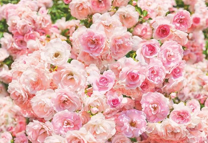 Φωτοταπετσαρία Τοίχου Λουλούδια - Komar - Decotek 8-937