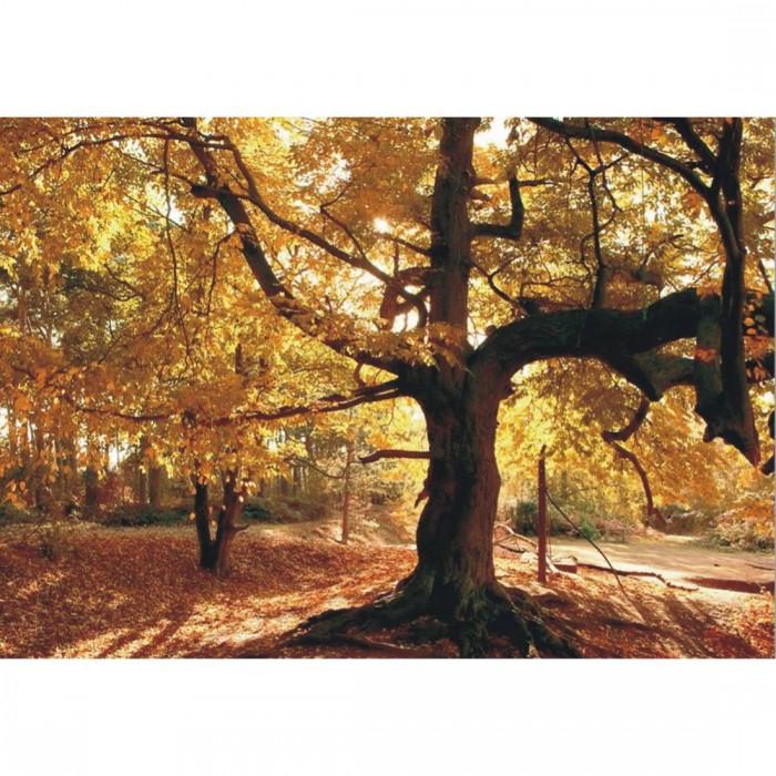 Φωτοταπετσαρία Τοίχου Δέντρο - A&G Design Group - Decotek FT 0149