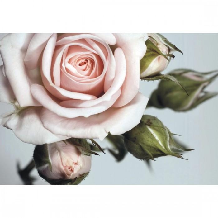 Φωτοταπετσαρία Τοίχου Τριαντάφυλλο - A&G Design Group - Decotek FT 0312