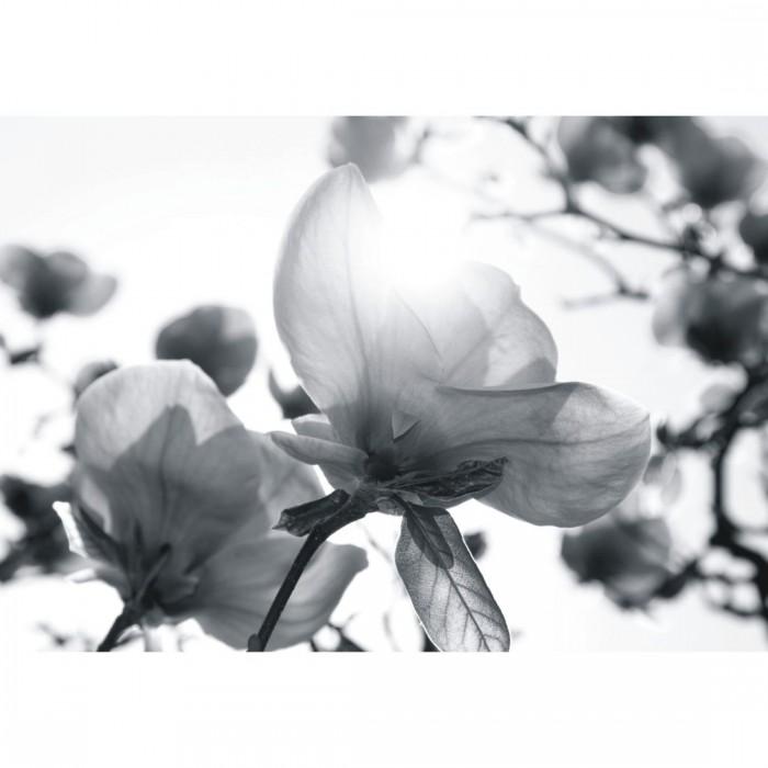 Φωτοταπετσαρία Τοίχου Άνθη - A&G Design Group - Decotek FT 0354