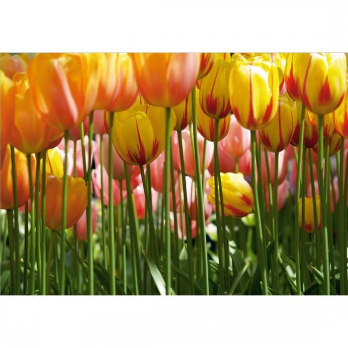Φωτοταπετσαρία Τοίχου Κίτρινες Παπαρούνες - A&G Design Group - Decotek FTS 0045
