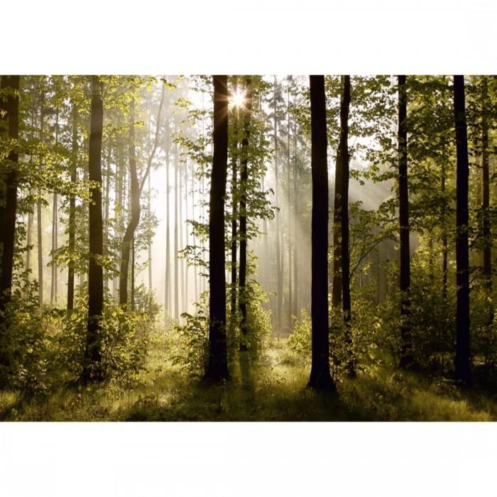 Φωτοταπετσαρία Τοίχου Δάσος - A&G Design Group - Decotek FTS 0181