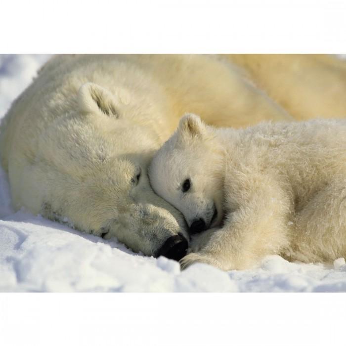 Φωτοταπετσαρία Τοίχου Αρκούδες - Komar - Decotek 1-605