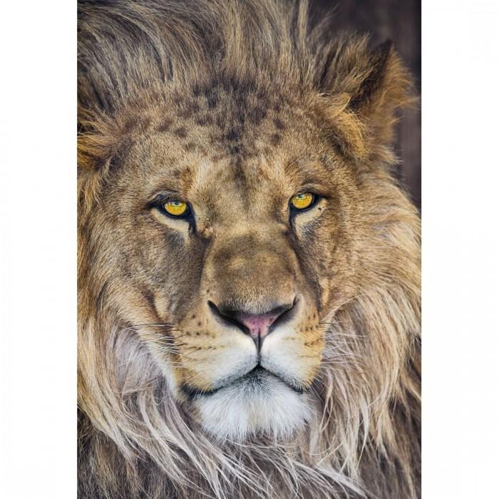 Φωτοταπετσαρία Τοίχου Λιοντάρι - Komar - Decotek 1-619