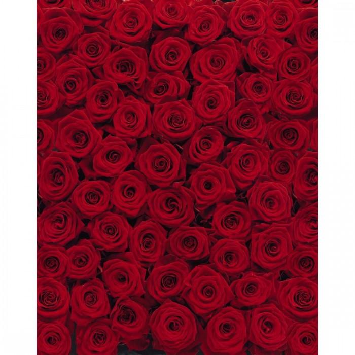 Φωτοταπετσαρία Τοίχου Τριαντάφυλλα - Komar - Decotek 4-077