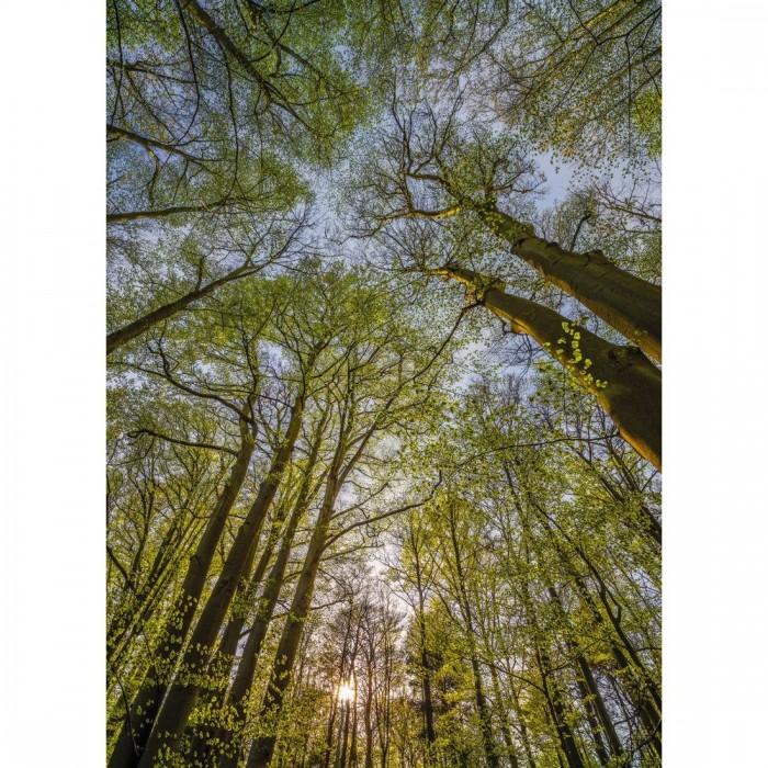 Φωτοταπετσαρία Τοίχου Θόλος Δέντρων - Komar - Decotek 4-522