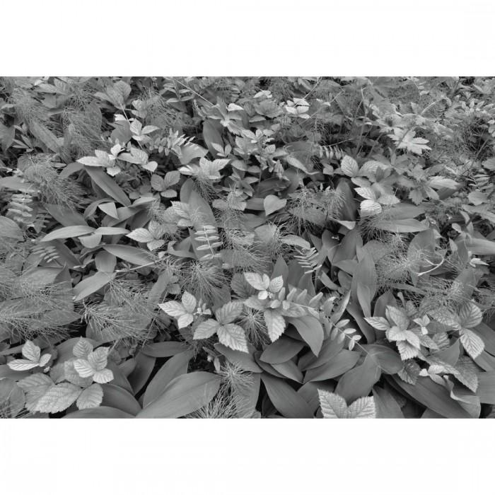 Φωτοταπετσαρία Τοίχου Φύση - Komar - Decotek 8-914