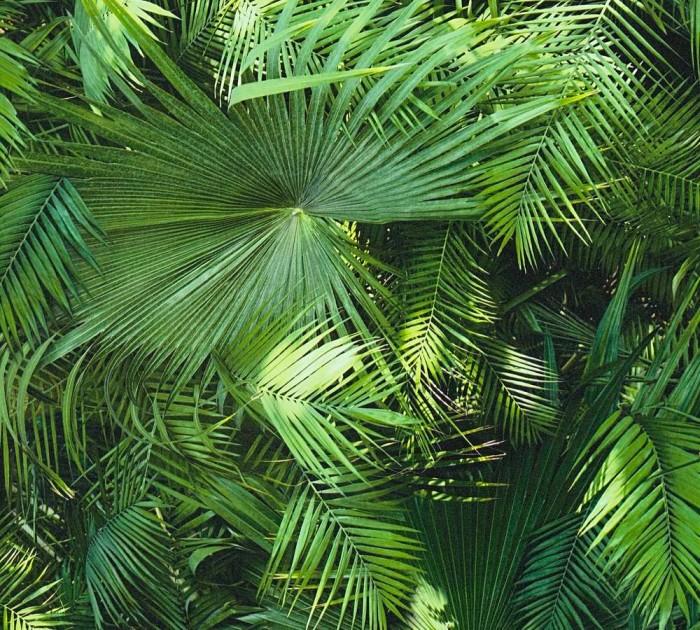 Μοντέρνα Ταπετσαρία Τοίχου Τροπικά Φυτά – AS Creation, Neue Bude 2.0 – Decotek 362001