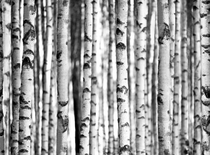 Φωτοταπετσαρία Τοίχου Δάσος - 1wall - Decotek W4P-FOREST-005