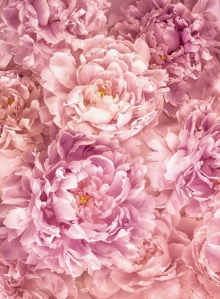 Φωτοταπετσαρία Τοίχου Ροζ Λουλούδια - Komar - Decotek XXL2-009