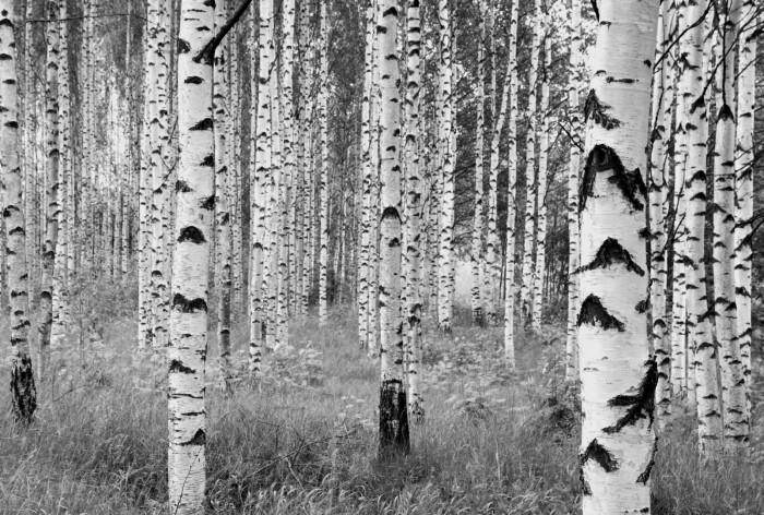 Φωτοταπετσαρία Τοίχου Δάσος - Komar - Decotek ΧΧL4-023