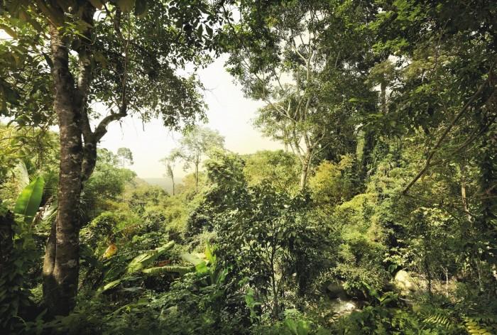 Φωτοταπετσαρία Τοίχου Δάσος - Komar - Decotek ΧΧL4-024