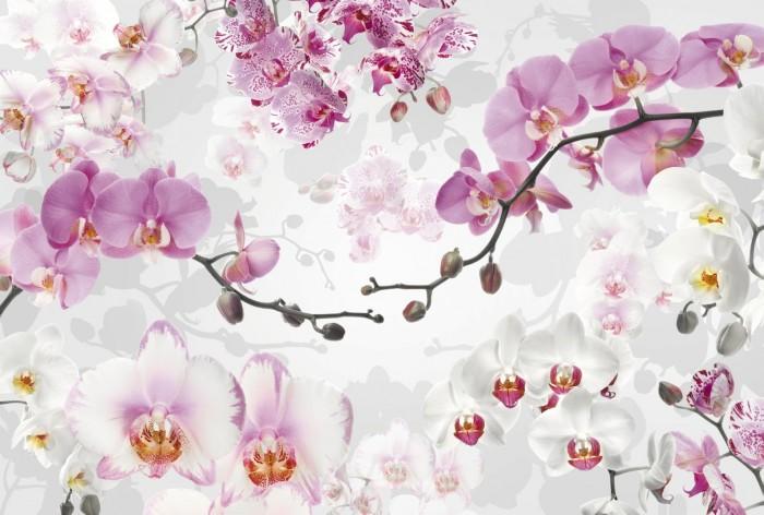 Φωτοταπετσαρία Τοίχου Λουλούδια - Komar - Decotek X8-032