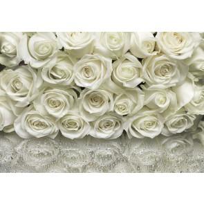 Φωτοταπετσαρία Τοίχου Λευκά Τριαντάφυλλα, Komar - Decotek 8-314