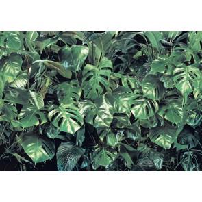 Φωτοταπετσαρία Τοίχου Πρασινάδα, Komar - Decotek 8-333
