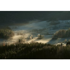 Φωτοταπετσαρία Τοίχου Ομιχλώδες Δάσος- W+G - Decotek 5102-4P