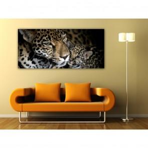 Φωτοταπετσαρία Τοίχου Λεοπάρδαλη - A&G Design Group - Decotek FTG 0909