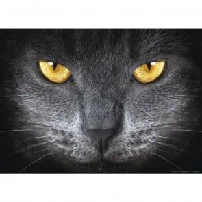 Φωτοταπετσαρία Τοίχου Γάτα - A&G Design Group - Decotek FTM 0500