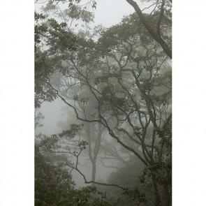 Πίνακας Ζωγραφικής Into The Trees