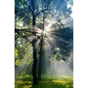Πίνακας Ζωγραφικής Stare The Sun