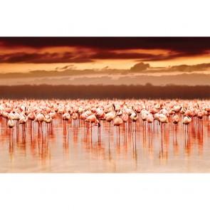 Πίνακας Ζωγραφικής African Flamingos On Sunset - Decotek 180665