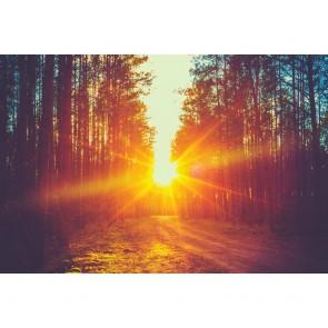 Πίνακας Ζωγραφικής Sunrise In The Forest – Decotek 180768