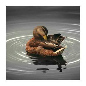 Πίνακας Ζωγραφικής Bird Alone In The Lake - Decotek 180821