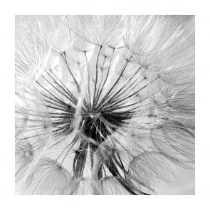 Πίνακας Ζωγραφικής Black and White Abstract Dandelion - Decotek 180823