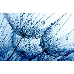 Πίνακας Ζωγραφικής Dandelions Drops - Decotek 180865