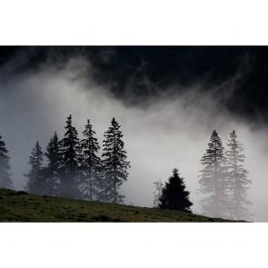Πίνακας Ζωγραφικής  Misty Forest - Decotek 180975