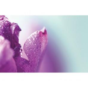 Πίνακας Ζωγραφικής Purple Closeup - Decotek 181034