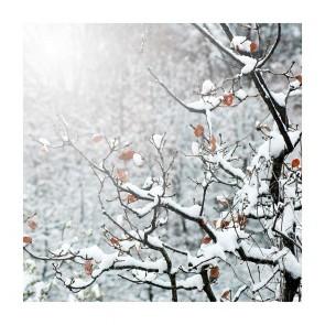 Πίνακας Ζωγραφικής Snow Beauty - Decotek 181061
