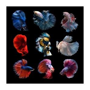Πίνακας Ζωγραφικής Stunning Fish - Decotek 181068
