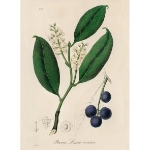 Πίνακας Ζωγραφικής Cherry Laurel – Decotek 190889