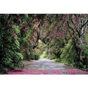 Φωτοταπετσαρία Τοίχου Μονοπάτι σε Πάρκο  - Komar - Decotek 8-985