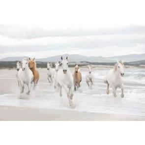 Φωτοταπετσαρία Τοίχου Άλογα - Komar - Decotek 8-986