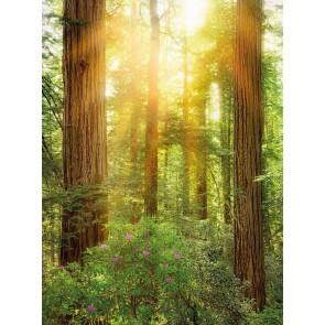 Φωτοταπετσαρία Τοίχου Δέντρα - Komar - Decotek XXL2-044