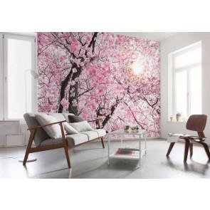 Φωτοταπετσαρία Τοίχου Ανθισμένα Δέντρα - Komar - Decotek XXL4-046
