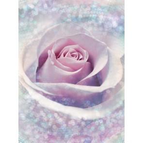 Φωτοταπετσαρία Τοίχου Ροζ Τριαντάφυλλο - Komar - Decotek XXL2-020