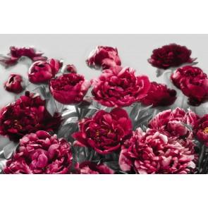 Φωτοταπετσαρία Τοίχου Λουλούδια - Komar - Decotek XXL4-002