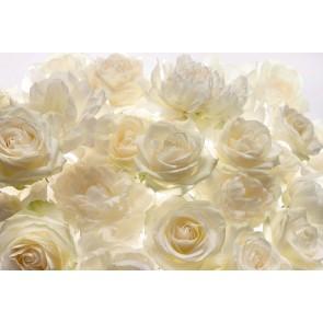 Φωτοταπετσαρία Τοίχου Λουλούδια - Komar - Decotek XXL4-007