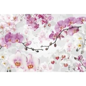 Φωτοταπετσαρία Τοίχου Λουλούδια - Komar - Decotek XXL4-032